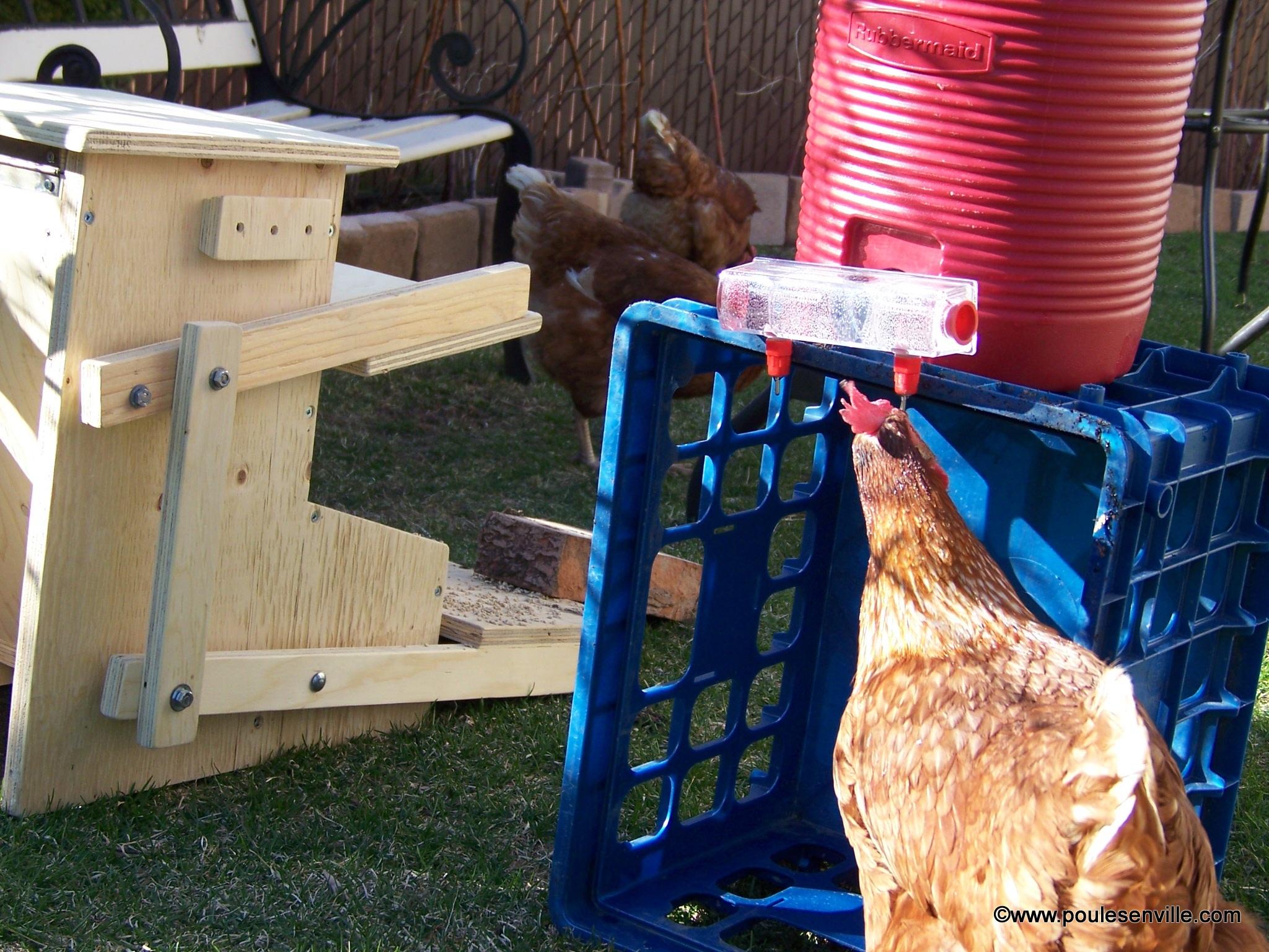 03 100 9482 poules en ville - Poules en ville reglementation ...