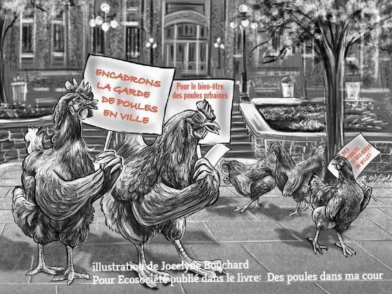 Legalisation des poules en ville